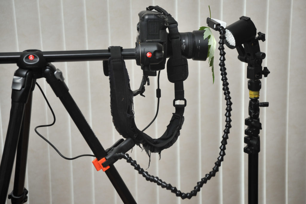 maple leaf closeup tripod rig
